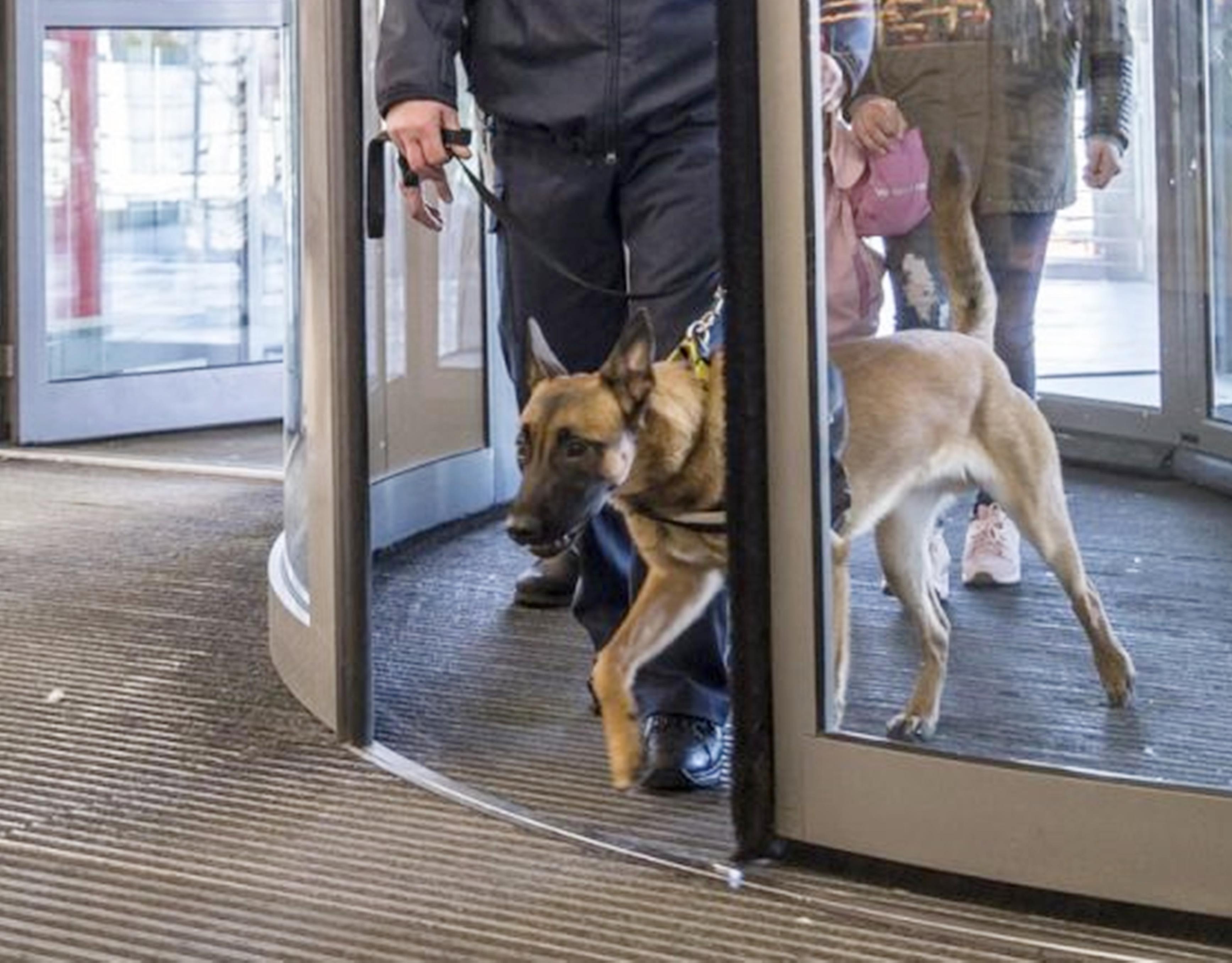 hundeführerdienst